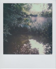 Evening Light on The Byes (ifleming) Tags: expiredfilm devon sidmouth thebyes sx70colourfilm impossibleproject polaroid sx70 polaroidsx70
