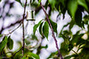 162 ~ 365 (BGDL) Tags: prestwick nikond7000 nikkor50mm118g nikkorafsmicro40mm128g no6365~2018 bgdl niftyfifty lightroomcc garden solarlightbulb lightamongstthetrees