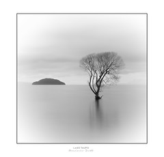 Solitude - Taupo New Zealand (Dominic Scott Photography) Tags: dominicscott newzealand lonetree lonely blackandwhite monotone taupo laketaupo tree longexposure leefilters fineart sony ilce7rm3 gmaster sel2470gm