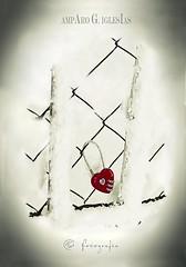 Las barreras del amor - Amparo García Iglesias (Amparo Garcia Iglesias) Tags: barreras amor posesion candado fotos amparo garcia iglesias red rojo blanco white nieve frio alambre articulo revista grada mayo 2018