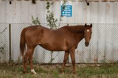 PD 02A_012305_Y (Darkly B) Tags: darklyb docks industiallandscape horse
