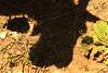 Shadowplay (gripspix) Tags: 20180531 nature natur fotospaziergang shadow schatten goat ziegenbock