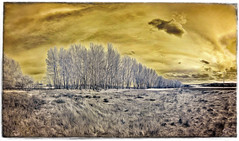 Sense Títol #0179 (Ar@lee) Tags: paisaje airelibre árbol amarillo bordeparafotos colours clouds cielo exteriors espectrocompleto fullspectrum filtre720nm fotografíainfrarrojos ir nikond7000 sky landscape nubes naturaleza photographyinfrared panorámica trees vegetacion exteriores