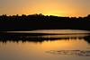 On Golden Pond (cjb_photography) Tags: highpark sun sunset sunlight reflection reflections silhouette pond grenadier torontophoto torontoclicks torontoguardian torontophotographer toronto photography photographer photo cjbphotography goldenhour golden trees