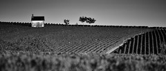 Le vignoble poullyssois (Thierry.Vaye) Tags: vignes vignoble pouillysurloire cabanon monochrome nb