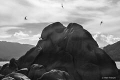 The birds and the rocks (larbinos) Tags: oiseau bird thaïlande thailand asie asia travel traveler voyage voyageur noiretblanc nature blackandwhite mai 2018 canon 5d markiii canon5dmarkiii