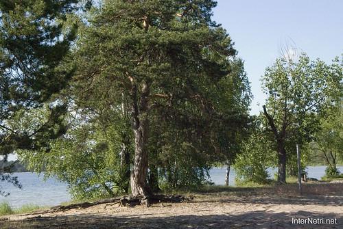 Шацький Національний Природний Парк Озеро Пісочне Сосни InterNetri  Ukraine 364