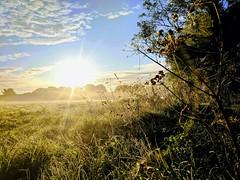Sunny field (Kol Tregaskes) Tags: koltphotography photo photography photooftheday pic picoftheday picture pictureoftheday
