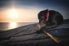 Bosse (Frank S. Schwabe) Tags: dog sunset shore sunlight summer sky sea stick rocks ocean norway nordmøre norge coast coastal sun canon clouds