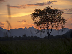 P5290028 (turbok) Tags: bäume ennstal landschaft pflanze pflanzenmitwasser sonnenaufgang stimmungen c kurt krimberger