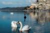 Cigni (tosco974) Tags: natura animali swan riflessi nikon luigitoscano cloud sky cielo nuvole fotografia foto photografy photo italy italia lazio anguillara water acqua lake lago cigni cigno