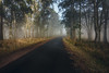 Mt. Buninyong (Mark McLeod 80) Tags: australia ballarat fog markmcleod markmcleodphotography mountbuninyong vic winter road