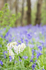 Photography Day out (JPetriePhotography) Tags: bluebells handcross himalayangardens personal riverhill scenery sevenoaks janepetriephotography kent photographer scenic tunbridgewells