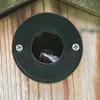 20180526 Carolina Chickadee (plumheadedfinch) Tags: birds passeriformes paridae poecile poecilecarolinensis carolinachickadee nests pennsylvania month05may 2018