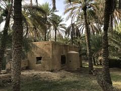 Al Ain Oasis 2018 (Patrissimo2017) Tags: