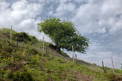 Lonely Tree (Click And Pray) Tags: managedbyclickandpraysflickrmanagr whistlefield landscape hillside horizontal argyll scotland tree alone single whistlefieldlandscapehillsidehorizontalargyllscotlandtreealonesinglegbr