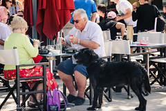 What about me? It isn't fair! I want my share... (Yuri Dedulin) Tags: eu europe france larochelle oldcity travel yuridedulin vieuxport dining lunch brunch food fun brasseriesaintnicolas holiday vacation enjoy harbor safés market oldport 2018