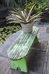 Garden Bench (Dragonsilk) Tags: bench pond water waterlily flower plant