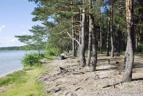 Шацький Національний Природний Парк Озеро Пісочне Сосни InterNetri  Ukraine 368
