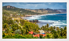 Bathsheba (Timothy Valentine) Tags: 2018 0418 caribbean surf vacation palm sliderssunday fosterhall saintjoseph barbados bb
