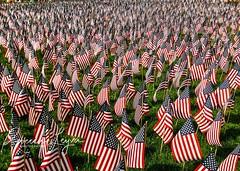 American Flags (Rebecca Leyva) Tags: phonephotography iphone unitedstates american americanflag seaofflags multiple sacrifice memorial massachusetts boston bostoncommon flags memorialday