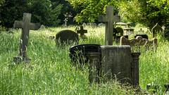 Halesowen church yard (Bobinstow2010) Tags: grave stones halesowen westmidlands overgrown green cross