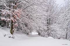 Soledad... y mucha nieve (Jabi Artaraz) Tags: nieve winter invierno negua pagoa árboles sendero camino virgen nievevirgen nature