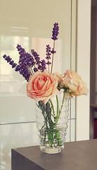 flowers (pierodmr) Tags: lavanda rose flowers lavander home