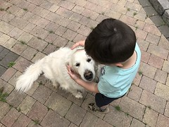 One Boy And His Dog (firehouse.ie) Tags: buddies littleboy child perspective retriever humds chiens perros canine animal iloveyou animals hund chien perro dogs man'sbestfriend faithfulfriend friend kindness affection love friendship holly dog boy friends