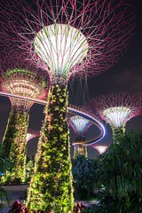 Gardens by the bay (Johannes R.) Tags: singapore gardens by bay asia night dark light colorful colourful illuminated illumination glow glowing wideangle wide skywalk tree artificial long exposure tripod canon 70d efs stm 1018 mm