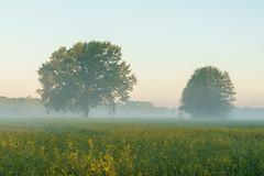 Frühlingsmorgen (Matthias Hertwig) Tags: matthias hertwig frühling nebel baum raps landschaft natur brandenburg deutschland sony a6000