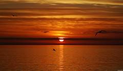 Mediterranean Sundance (KOSTAS PILOT) Tags: sunset goldenlight goldenhour sun sky clouds seagull birds liquidgold silhouette sea light horizon shadows kostaspilot sony sonyhx60 serenity seacape orange coast beach achaia mediterranean patraikosbay peloponese patrascitysunset ελλάδα πελοπόννησοσ αχαιασ πατραικοσ θαλασσα ουρανόσ γλαροσ οριζοντασ σιλουέτα σκιεσ χρυσηωρα χρυσοφωσ πορτοκαλί ήλιοσ ηλιοβασίλεμαπατρασ πατρινοηλιοβασίλεμα ηλιοβασίλεμα φωσ παραλίαπατρων παραλία scenic ιονιον μεσογειοσ