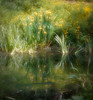 Flags and buttercups reflected (judy dean) Tags: 2018 painswick judydean rococogardens lake flags iris buttercup reflections