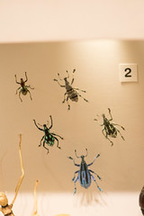 Colorful bugs (quinet) Tags: 2017 canada ontario rom royalontariomuseum toronto museum musée naturalhistory 124