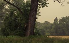 Estuary Rhine-Sieg (Netsrak) Tags: baum bäume dunst europa europe landschaft meindorf natur nebel sieg fog haze landscape mist