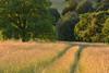 Sous la lumière du soir (Excalibur67) Tags: nikon d750 sigma contemporary globalvision 100400f563dgoshsmc paysage landscape campagne arbres trees prairie alsace