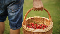 What's in your basket? (Caropaulus) Tags: cherry cherries fruit basket man red green
