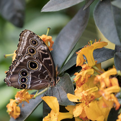 Rorschach Test (MomoFotografi) Tags: rorschach butterfly papillon zuiko colorful insect macrography