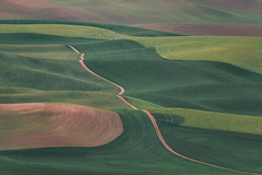 The Snake (Pedalhead'71) Tags: palouse rural washington whitmancounty wheat garfield unitedstates us