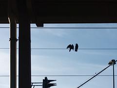 two birds (Juliett09) Tags: darktable sonyrx100m3