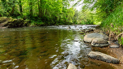 River Roe in the Roe Valley country park (jac.photography49) Tags: exposure reflections fullframe grass ireland park fauna images rocks northernireland countrypark river roevalley tree roe view valley water canon wideangle