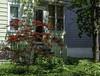 Japanese Maple (☼☼Good Day Sunshine!☼☼) Tags: tree small redleaves japanesemaple acer house yard ithacany