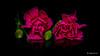 Purple Dianthus caryophyllus (Magda Banach) Tags: canon canon80d dianthuscaryophyllus sigma150mmf28apomacrodghsm blackbackground buds colors flora flower flowers green macro nature purple reflection