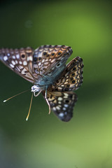_MG_1118 (MikeDotsonKC) Tags: bug insect moth butterfly butterflies canon6d canon100mmmacro28