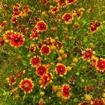 Lady Bird Johnson Wildflower Center 10 thumbnail