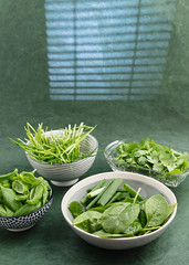 Baby spinach, scallion, basil, cilantro and chives. (annick vanderschelden) Tags: bowl grey spinach babyspinach chopped scallion green vegetables ingredients chives cilantro basil pesto paste food cooking