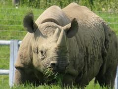 IMG_0176 (duncansmith50) Tags: yorkshirewildlifepark lions polar bears black rhino tigers giraffes doncaster