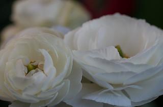 White in the Fairy Garden