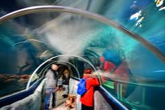 Where do we go? (Tobi_2008) Tags: aquarium menschen people sylt schleswigholstein deutschland germany allemagne germania