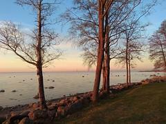 Sunset. Petergof. (presteza777) Tags: thegulfoffinland coast petergof peterhof stpetersburg russia trees sunset coucherdusoleil puestadelsol tramonto sun sky